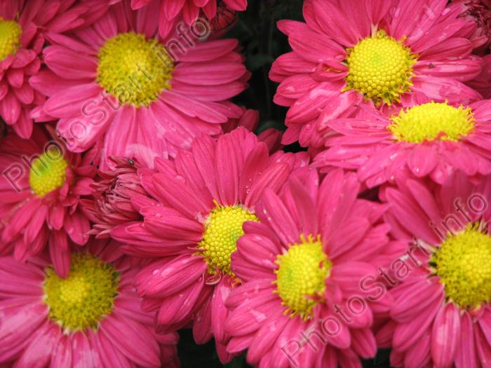 ярко розовые картинки