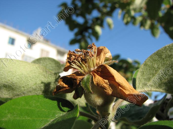 Фотографии картинки фото лекарственных растений