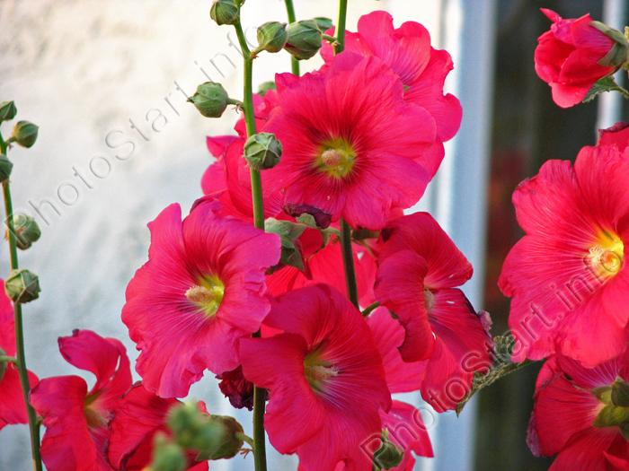 http://www.photostart.info/images/498_med.jpg