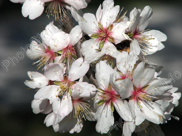 Цветы на nanopics тюльпаны цветы растения