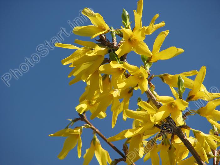 Цветы с желтыми цветами