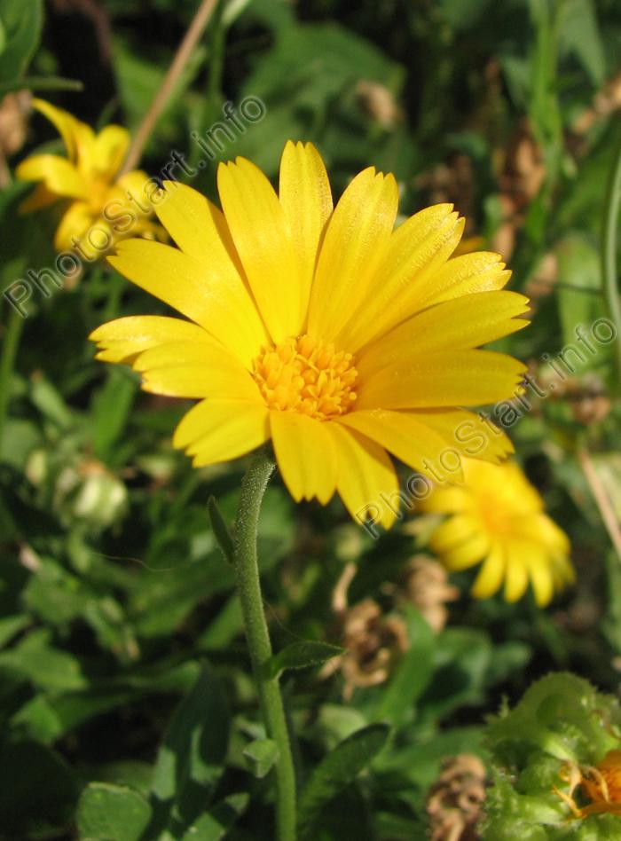 Самые красивые цветы в мире ( Очень много ФОТО )