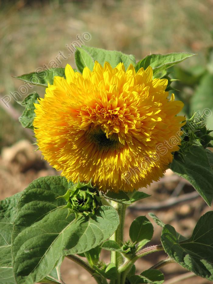 Поразительный цветок
