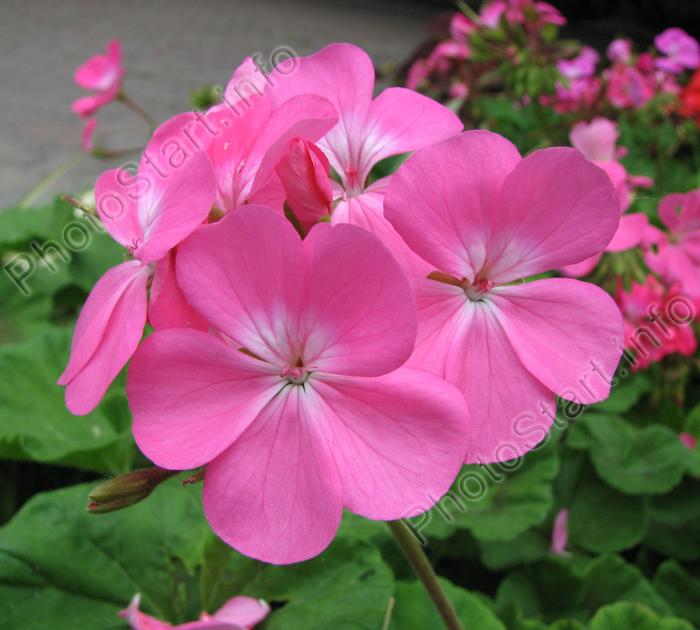 http://www.photostart.info/images/895_med.jpg